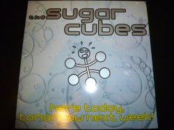 画像1: SUGARCUBES/HERE TODAY,TOMORROW NEXT WEEK!