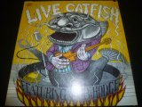 CATFISH FEATURING BOB HODGE/LIVE